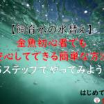 【飼育水の水替え】金魚初心者でも安心してできる簡単な方法を5ステップでやってみよう!
