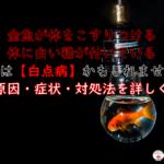 金魚が体をこすりつけたり体に白い粉がある時【白点病】症状や対処法を詳しく