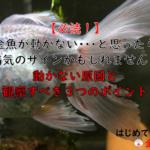 【必読!】金魚が動かない・・・と思ったら病気のサインかもしれません!動かない原因と観察すべき3つのポイント